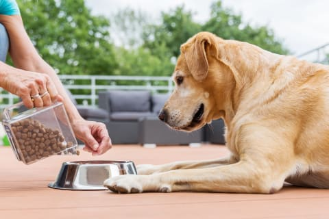 Best diet for diabetic dogs, Memphis Vet