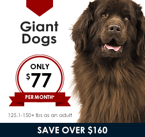 Plans for Giant Dogs