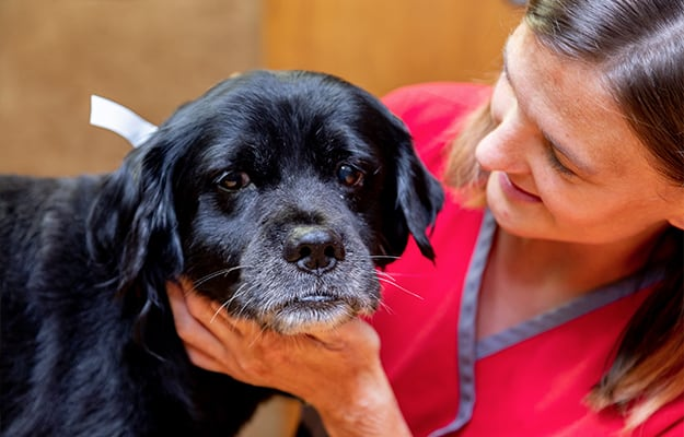 Caring for Memphis Pets | Memphis Veterinarian | Stage Road Animal Hospital